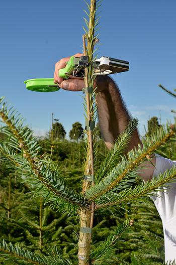 Holzstäbe für gerades Wachstum